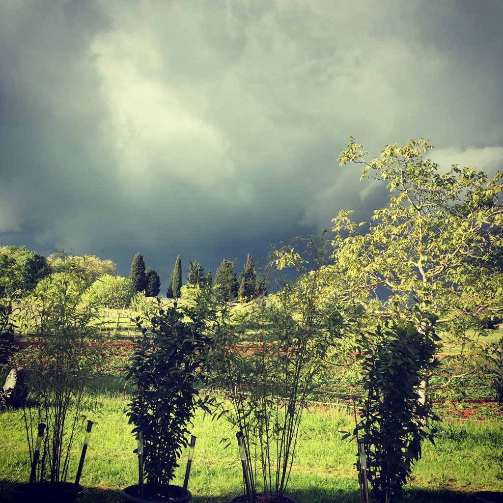 Gathering storm clouds - Istria