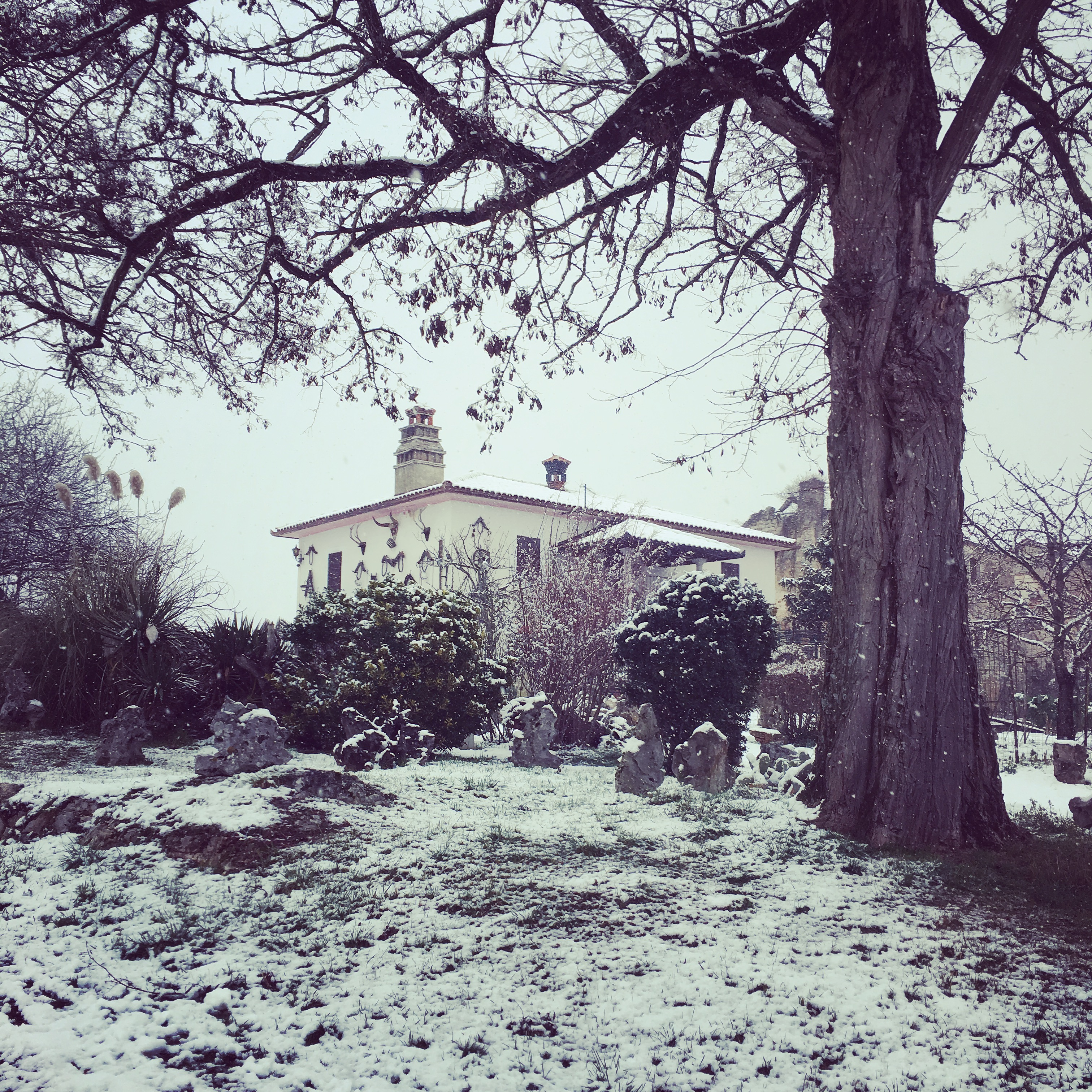 Neighbour's house, which looks very pretty, in the snow.
