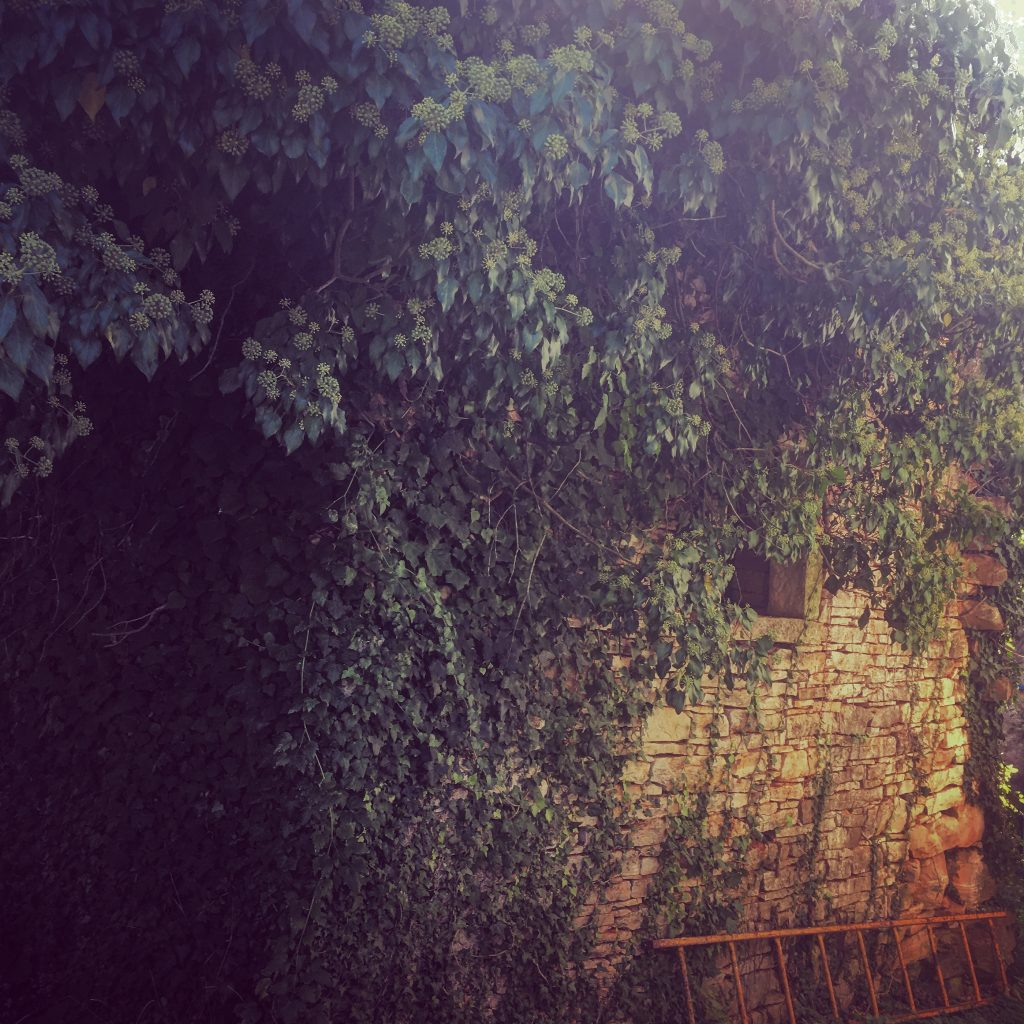 Currently overgrown with thick, lush ivy - a haven for the bees...