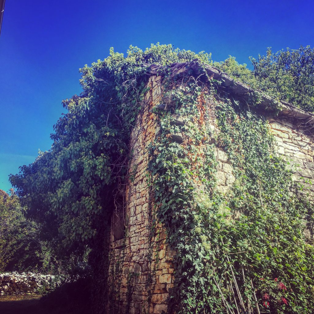 The Little House - being reclaimed by nature.