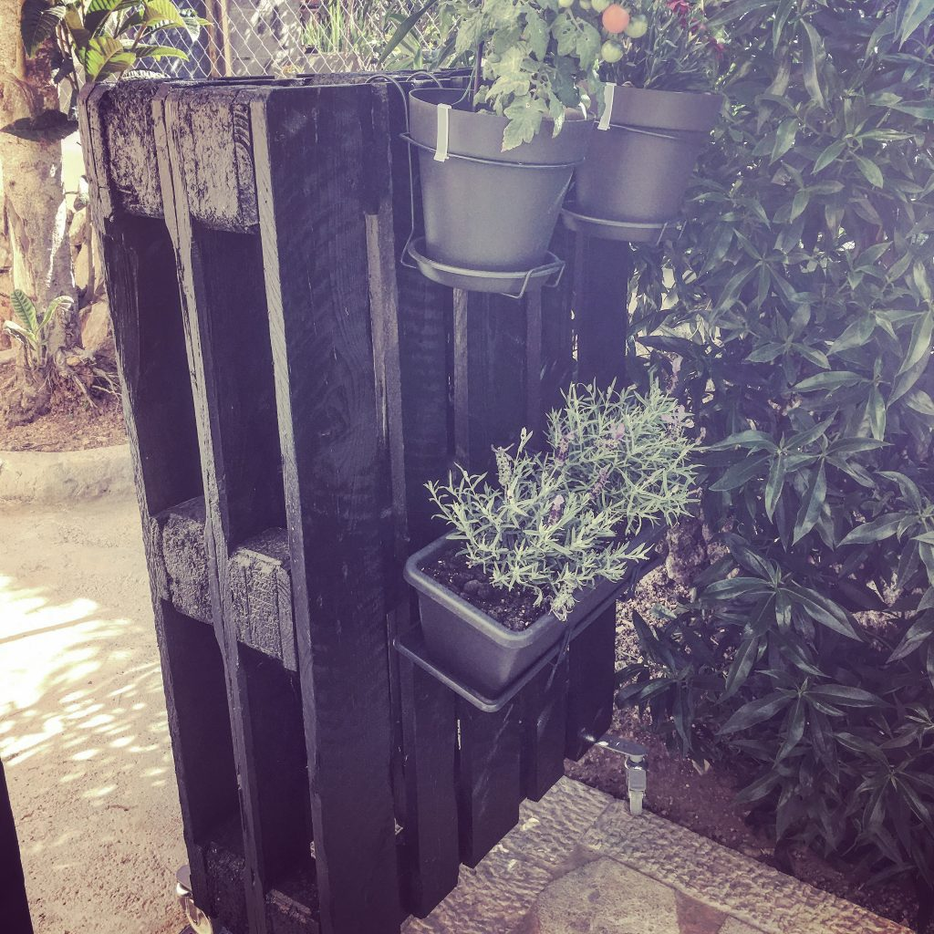 Great idea with back to back paletts, doubling up as divider and a hanging potted garden.